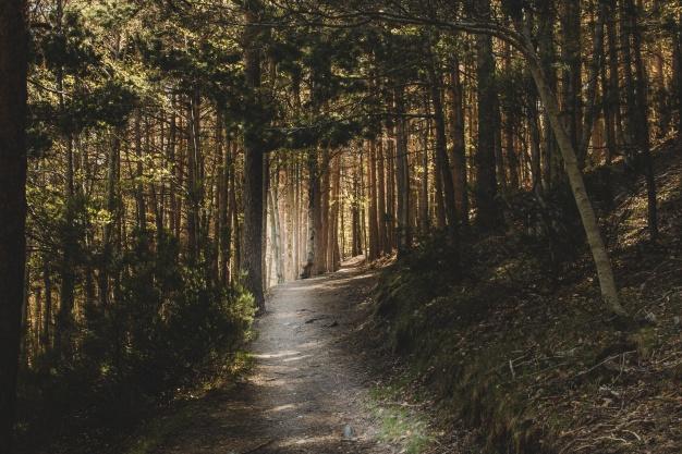 sommerhus tæt på skov